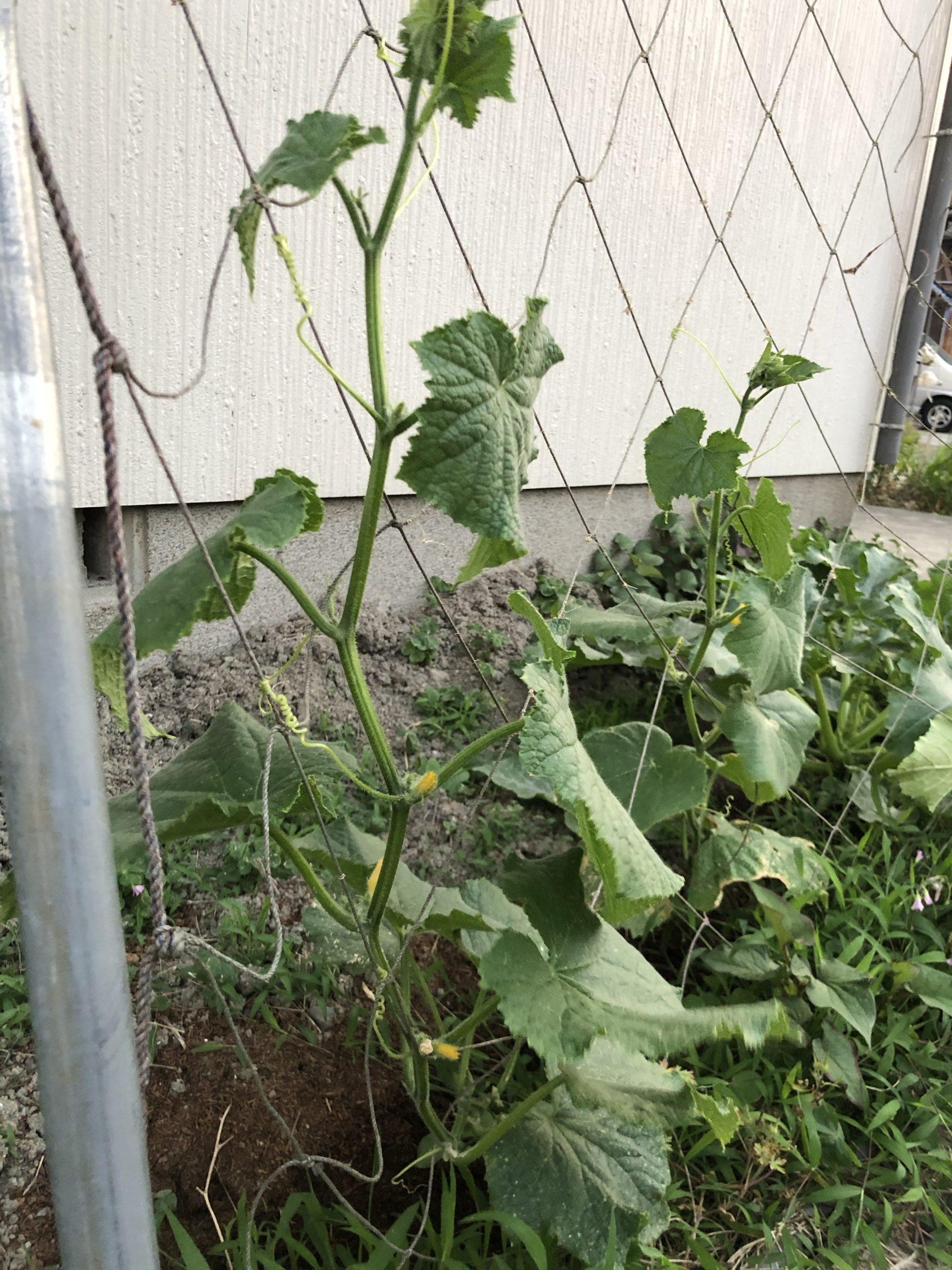 野菜を食べよう😚もう少し😚